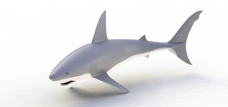 Test eines Haikäfigs in SOLIDWORKS Simulation