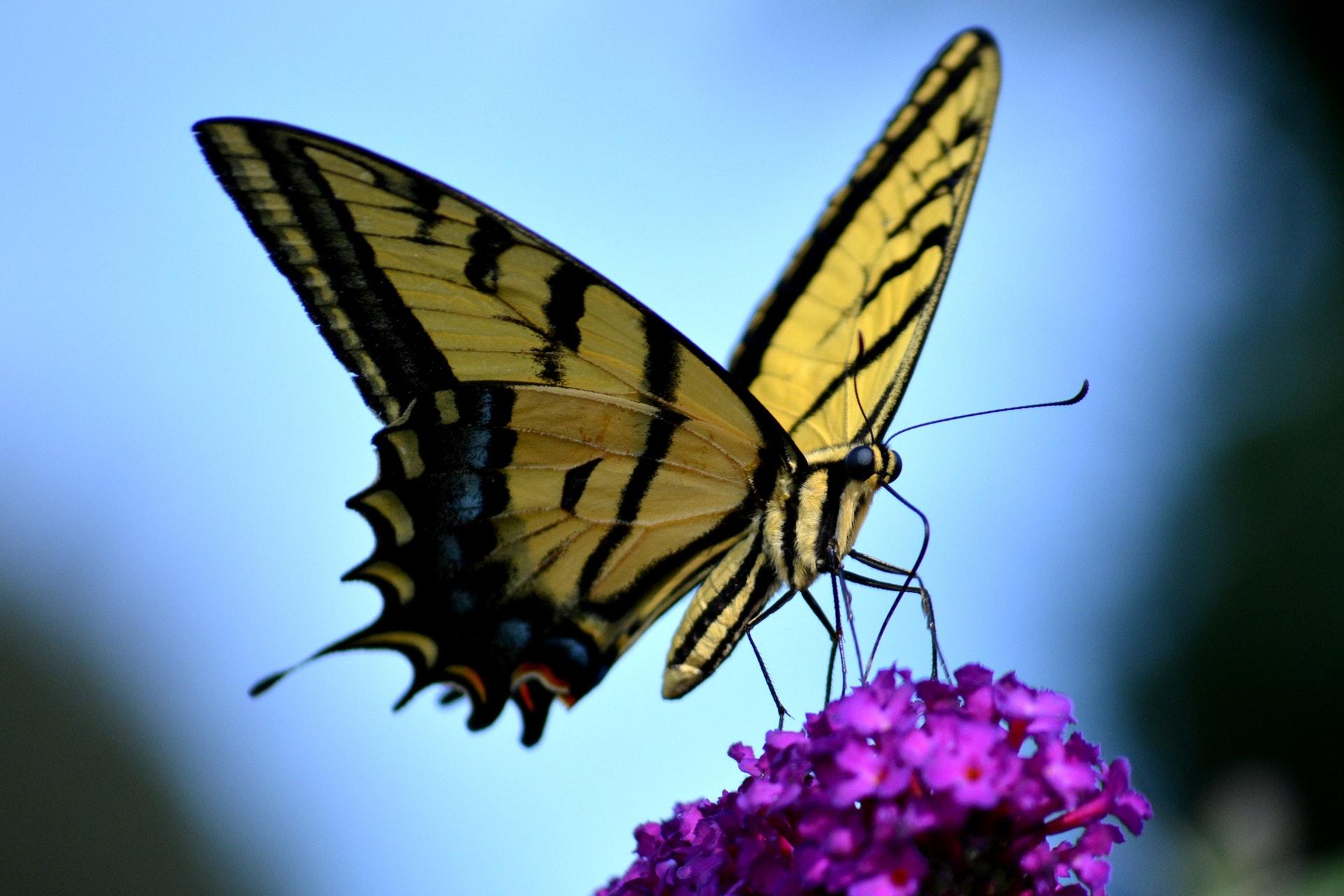 procesos industriales y el efecto mariposa