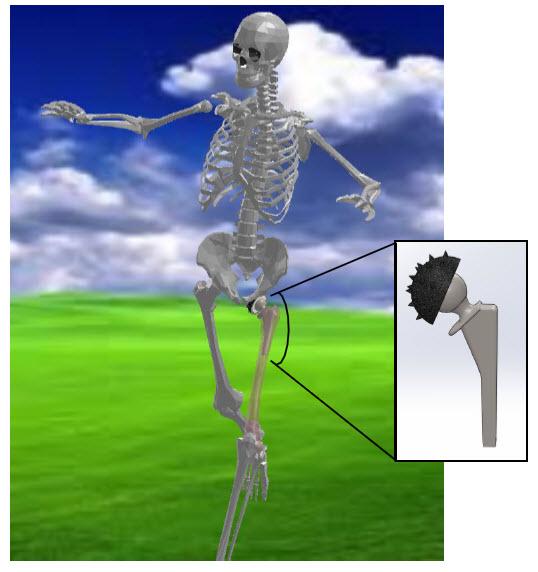 solidworks model of a human skeleton on my kitchen table, Skeleton