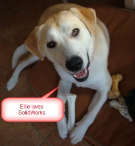 Ellie - Yellow Lab - Great Pyrenees Mix - SolidWorks - Copy