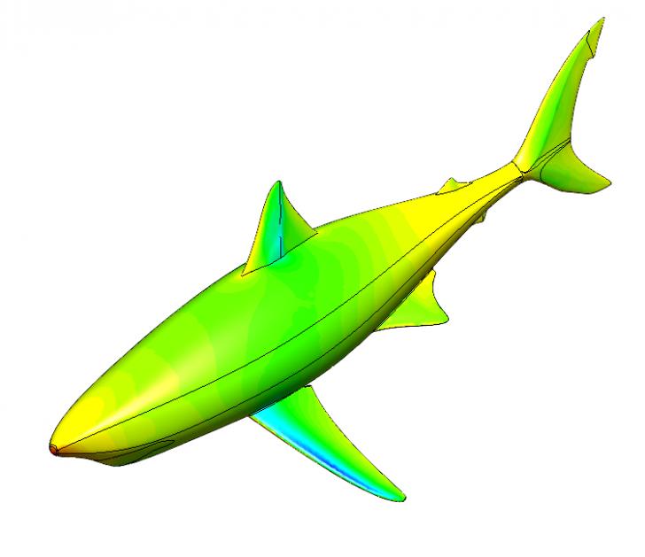 The Evolution of Shark Anatomy